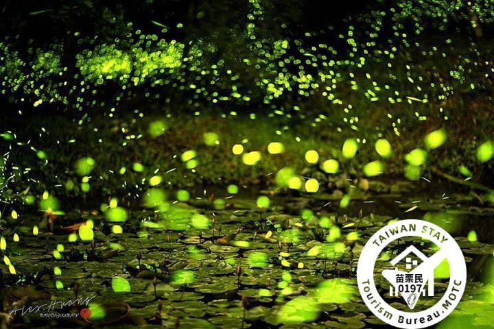 4月螢火蟲夜間火把夜遊導覽