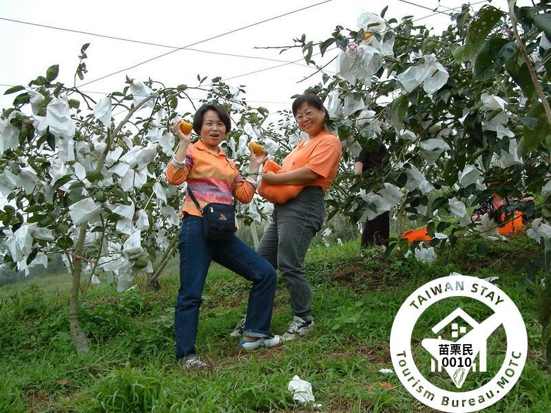 甜柿觀光果園