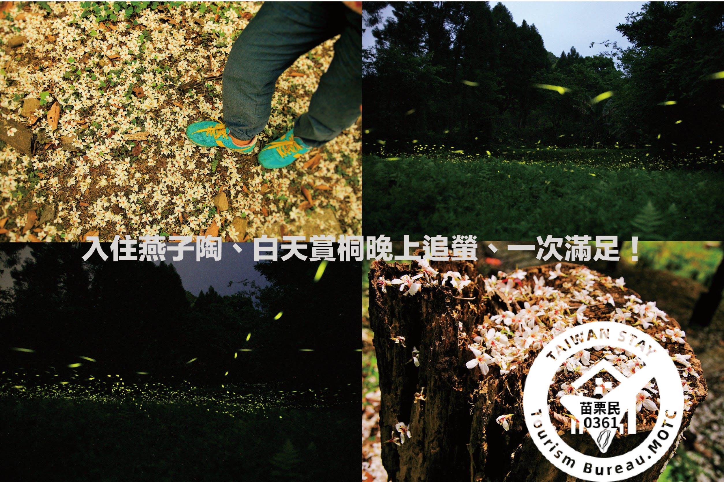 桐花螢火蟲